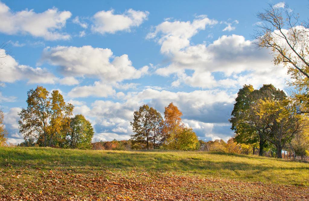 Autumn Hillside by muffet1