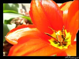 'Tangerine' by NCPanthersgurl
