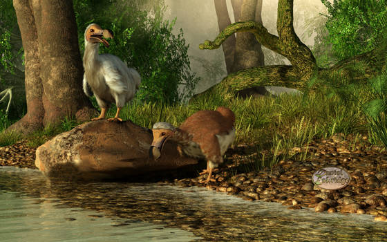 Dodos on the Riviere Tamarin