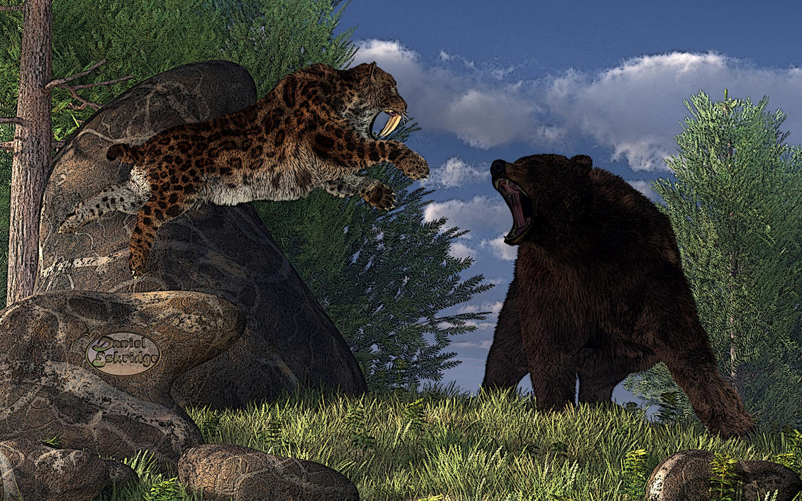 animal face off black bear vs tiger