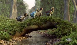 Follow the Dodo