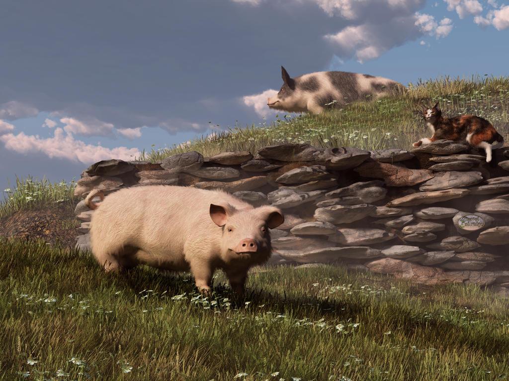 Free Range Pigs by deskridge