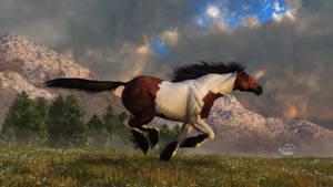 Pinto Mustang Galloping