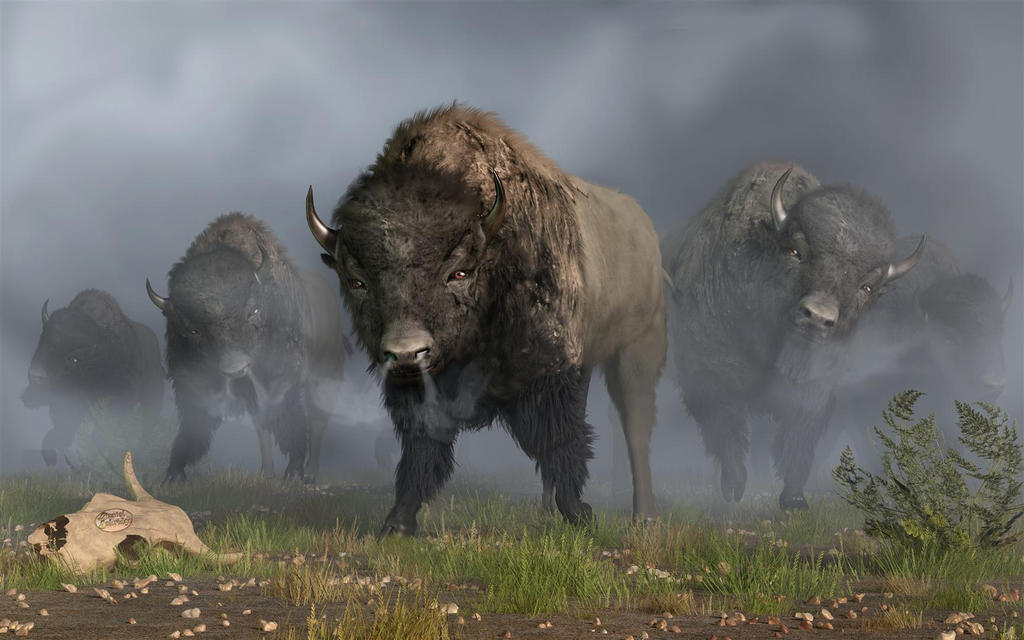 The Buffalo Vanguard