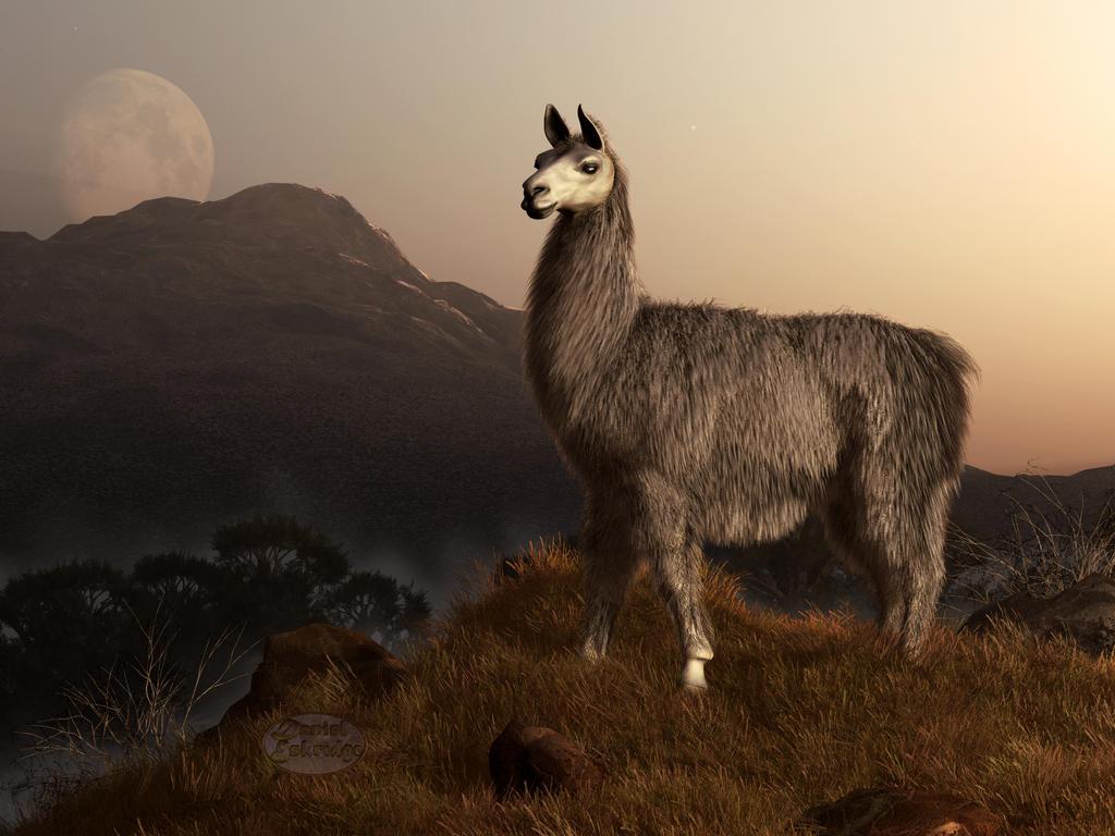 Llama Dawn by deskridge