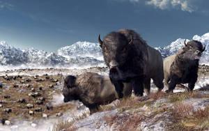 Bison Herd in Winter by deskridge