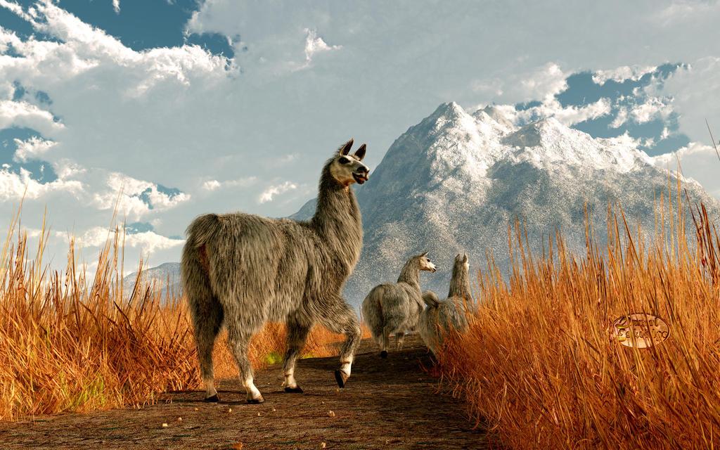 Follow the Llama by deskridge