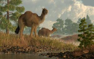 High Arctic Camel by deskridge