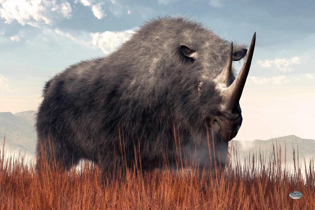 Ice Age Rhino