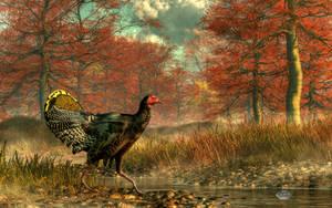 Wild Turkey by deskridge