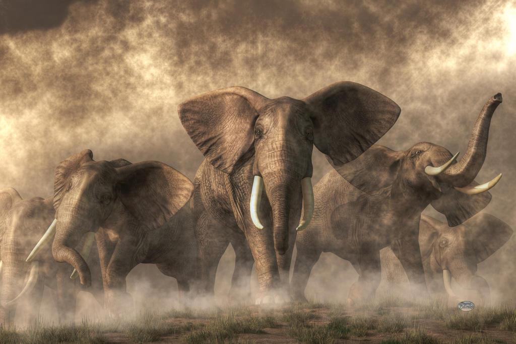 Elephant Stampede by deskridge