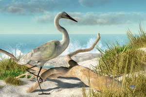 Beach Egret by deskridge