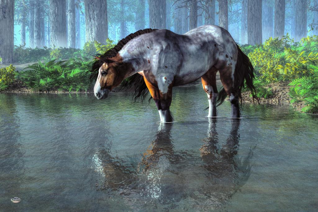 Wading Horse by deskridge