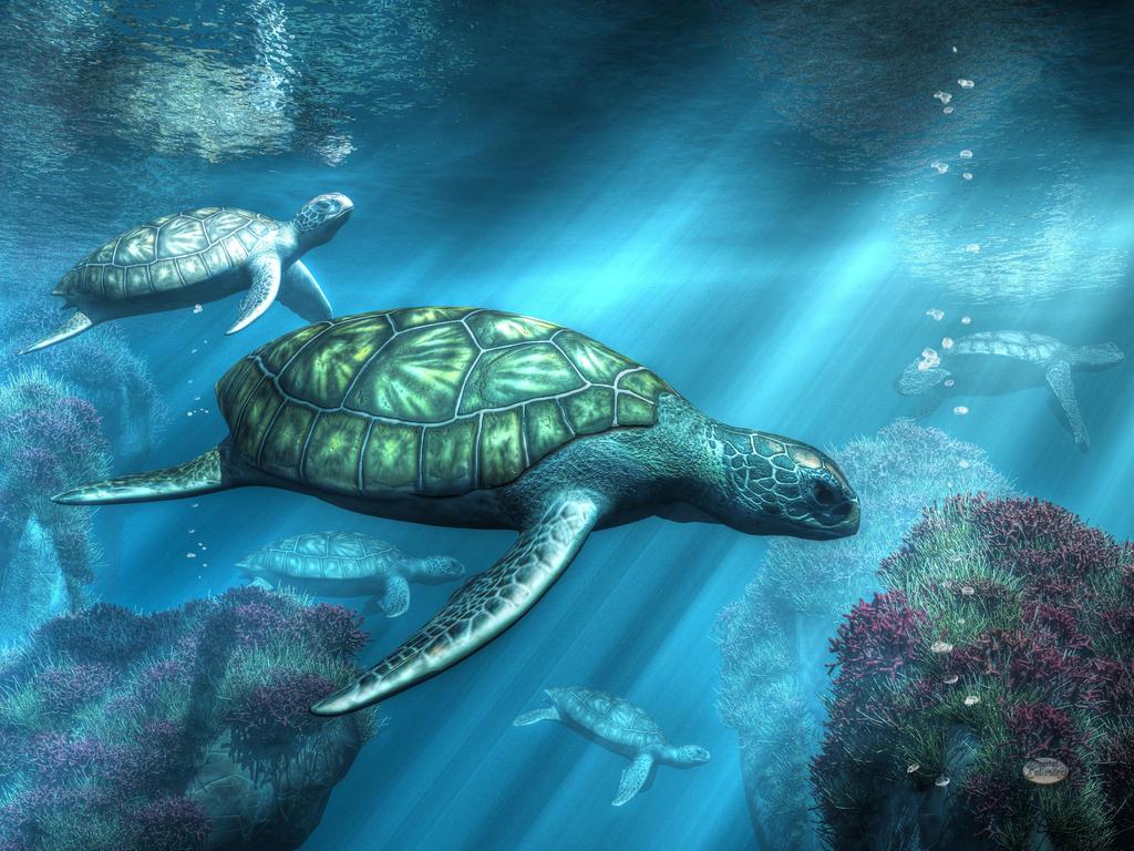 Sea Turtles by deskridge
