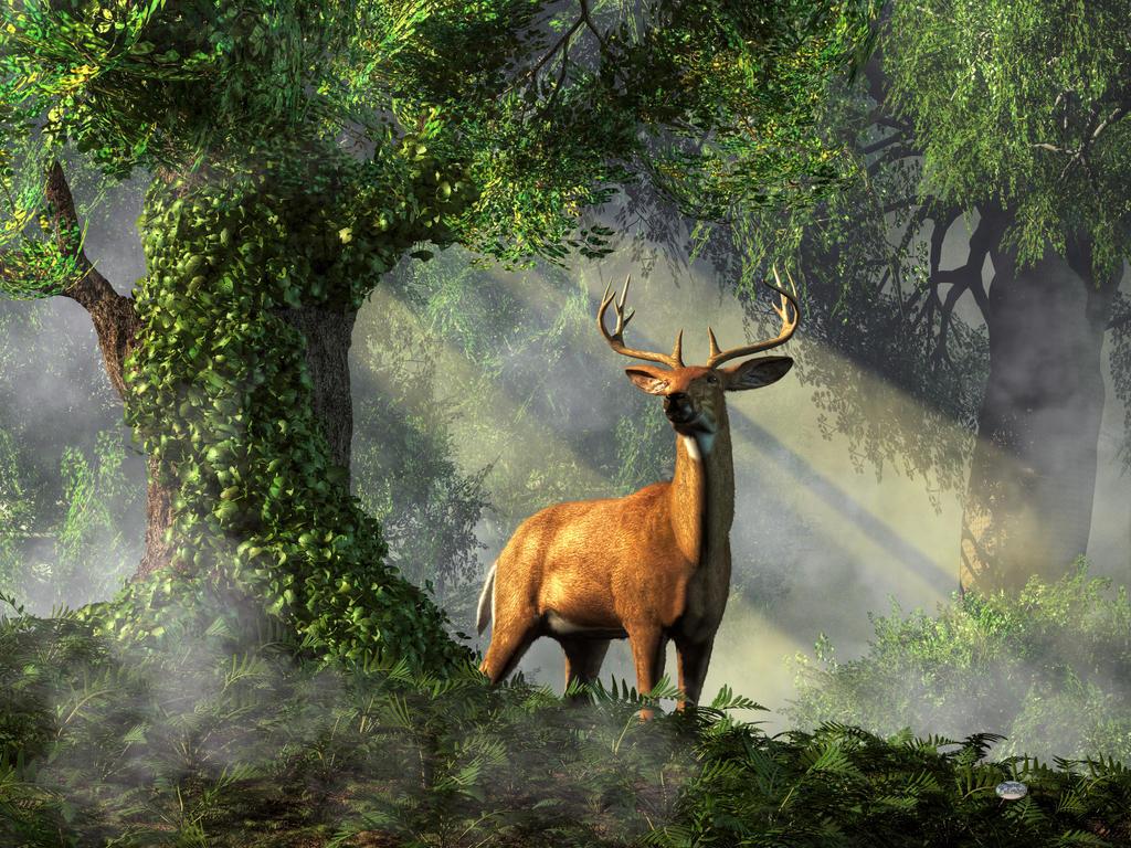 King of the Woods by deskridge