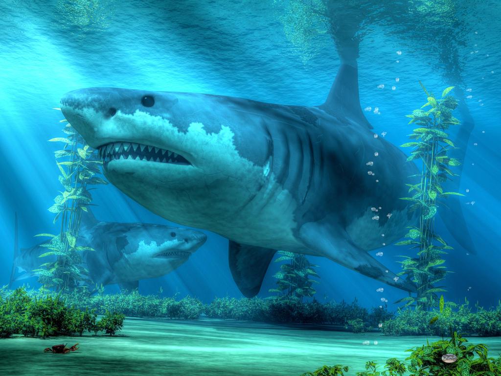 The Biggest Shark by deskridge
