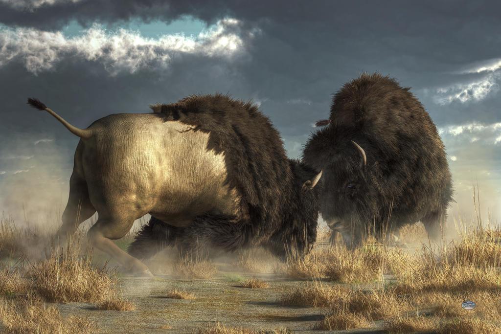 Buffalo Clash By Deskridge On Deviantart