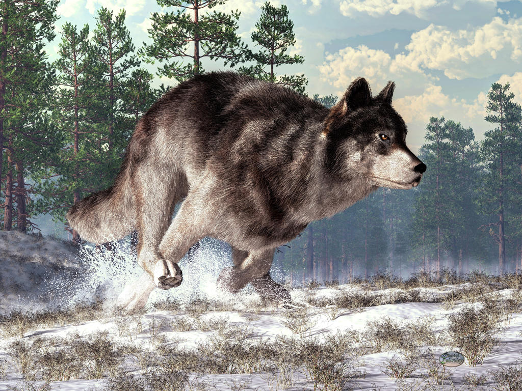 Running Wolf by deskridge