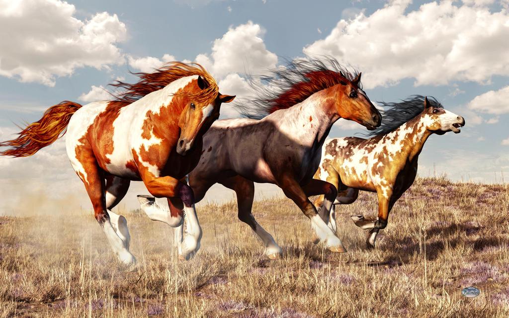 Galloping Mustangs By Deskridge
