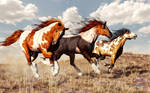 Galloping Mustangs