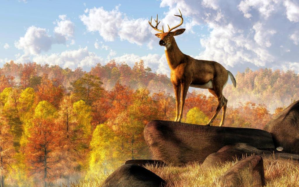 Buck Over Autumn Valley by deskridge