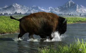Bison Crossing A River by deskridge