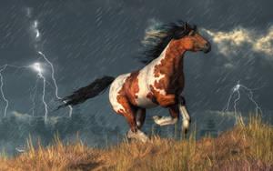 Storm Mustang