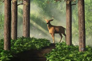 Deer on a Forest Path by deskridge