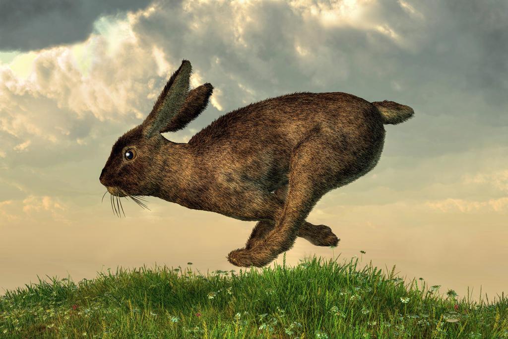 Running Rabbit by deskridge