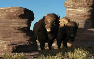 Buffalo Guard by deskridge