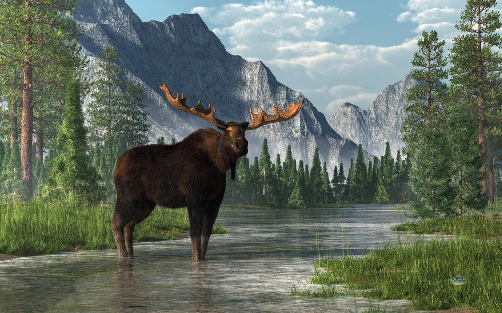 Bull moose wallpaper - photo#28