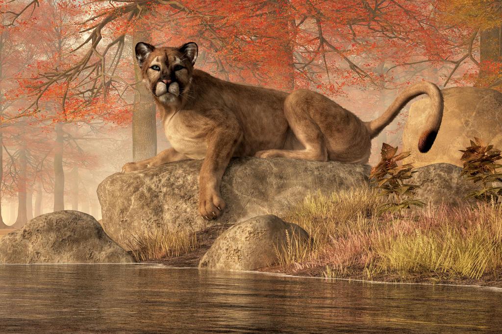 The Old Mountain Lion by deskridge