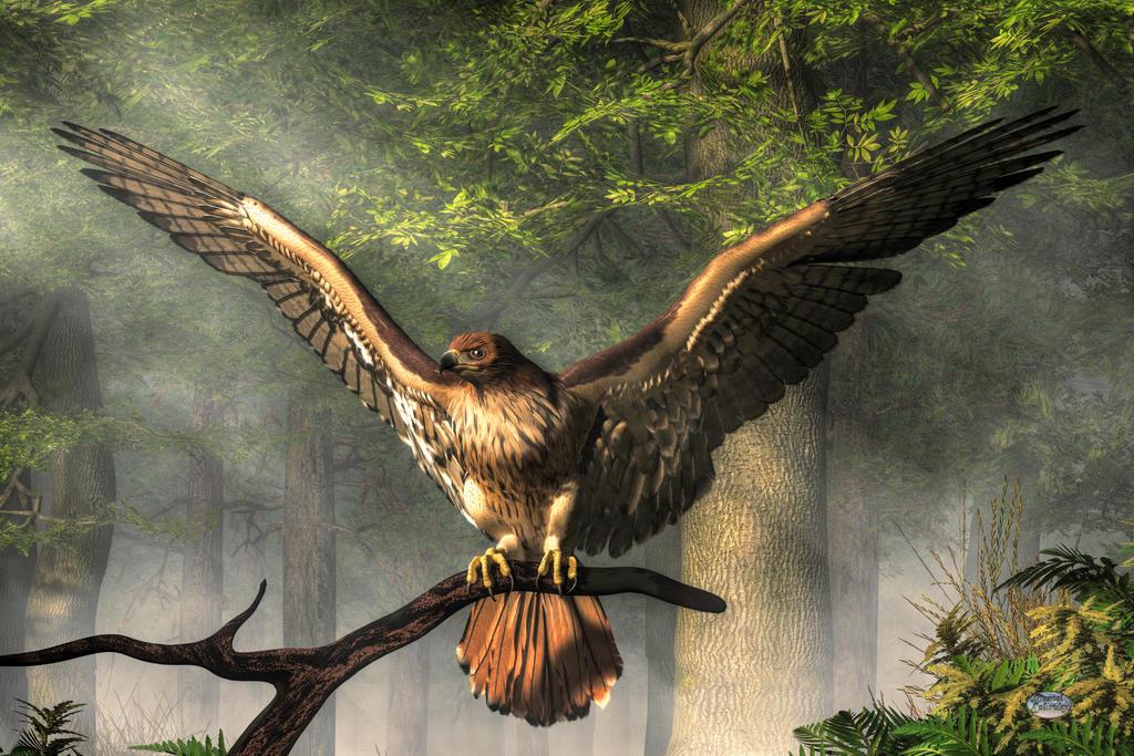 Red Tailed Hawk by deskridge