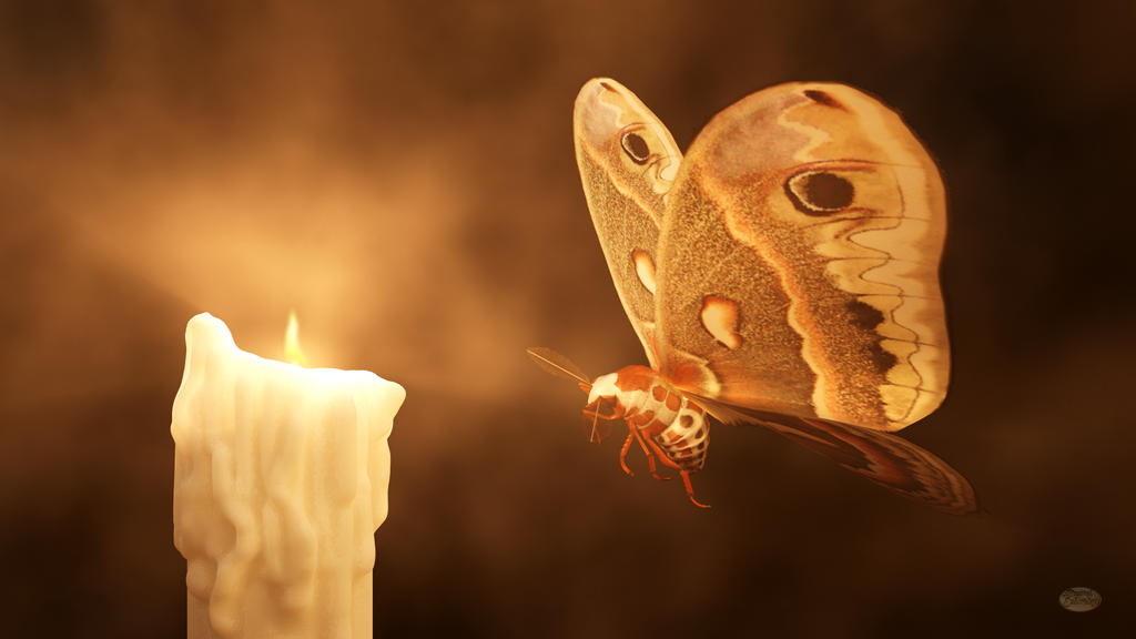 """Be the flame, not the moth,"" advised Casanova Like_a_moth_to_a_flame_by_deskridge-d9r0r35"