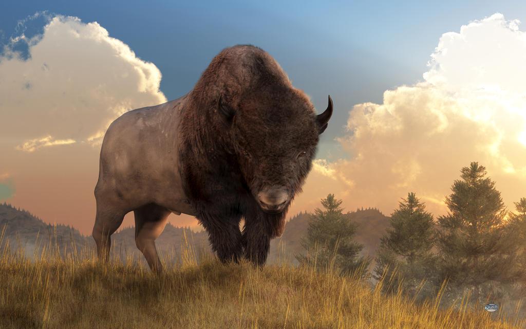 Buffalo Sunset by deskridge