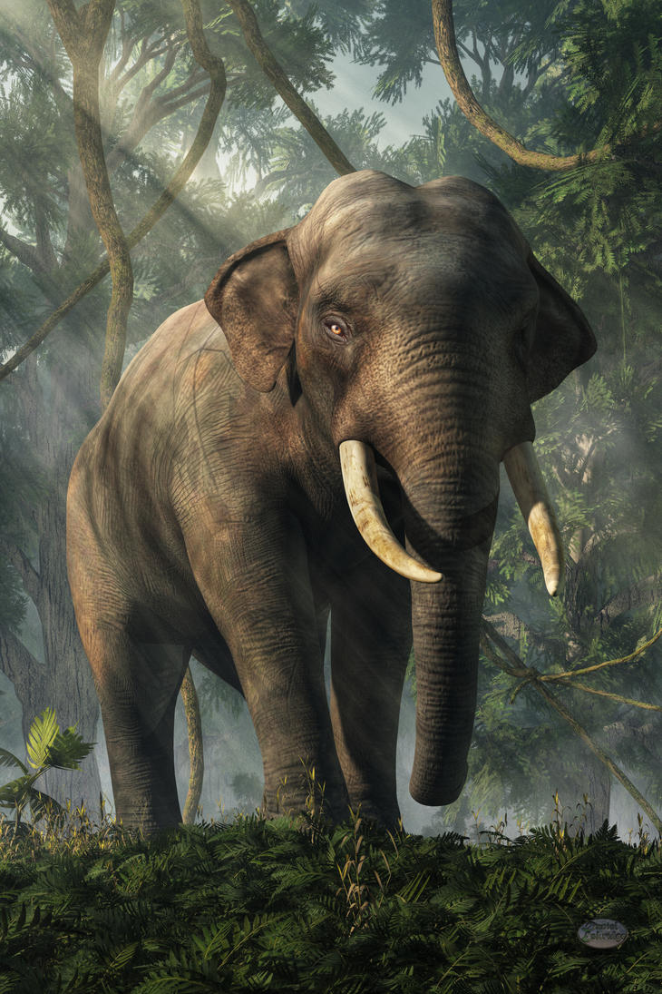 Jungle Elephant By Deskridge On Deviantart