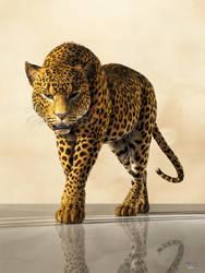 Leopard by deskridge