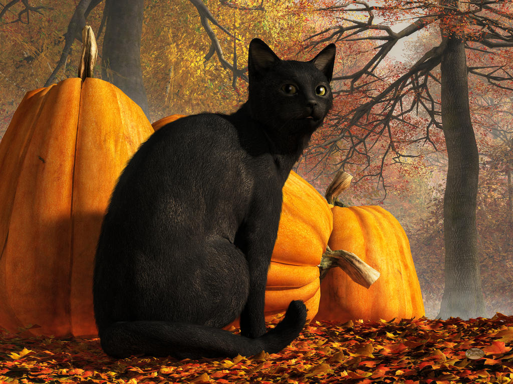 Black Cat At Halloween by deskridge on DeviantArt