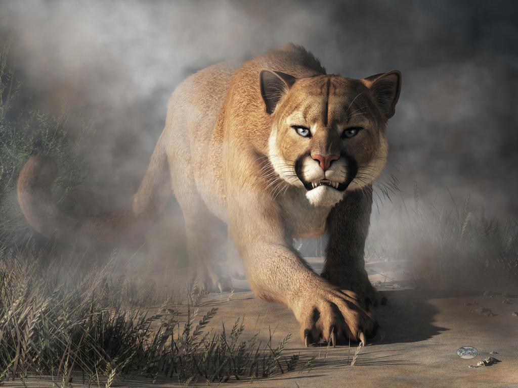 Cougar Is Gonna Get You by deskridge