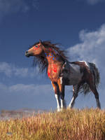 Warrior Spirit by deskridge