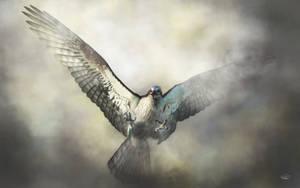 Osprey by deskridge
