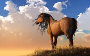 Chestnut Horse by deskridge