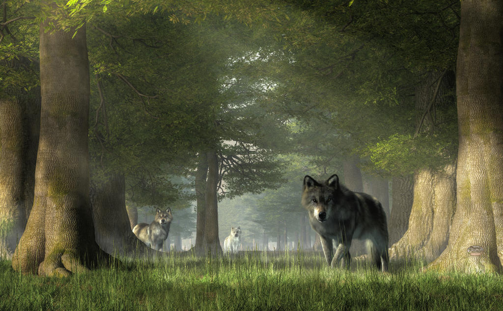 Wolves in the Forest by deskridge