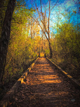 The Wooden Trail