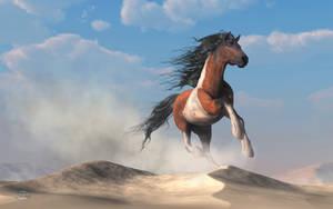 Paint Horse in the Desert by deskridge