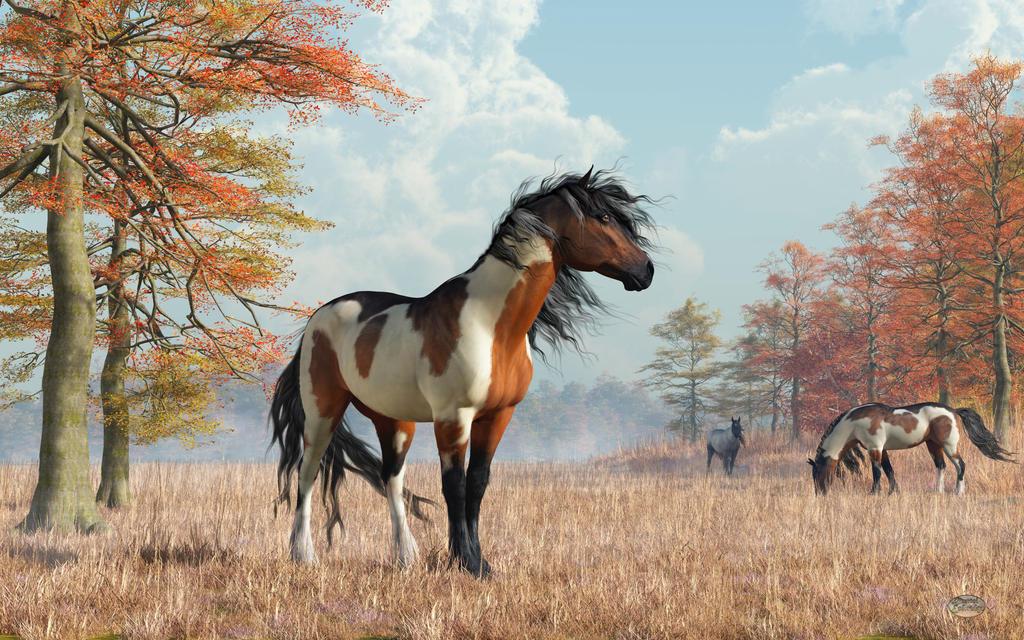 Paint Horses in Autumn by deskridge