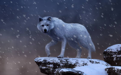 Spirit of the Blizzard