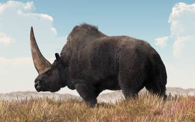 Elasmotherium by deskridge