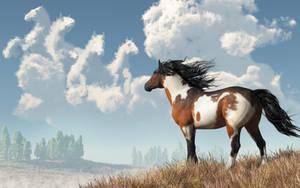 Spirits of Mustangs Past by deskridge