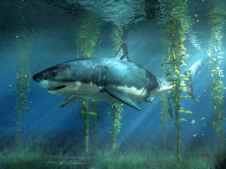Great White Shark in the Seaweed